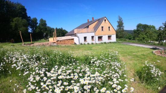 Kopretinová meadow